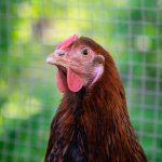 08 – Kaszotto, kurczak w diecie wegańskiej i inne porażki – rozmowa z Piotrem